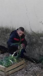 marwan-jardinage